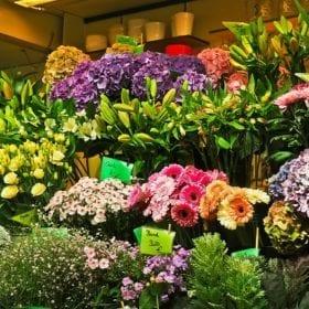 flowers 1696533 640