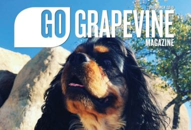 go grapevine magazine summer 2019 dog in park on cover