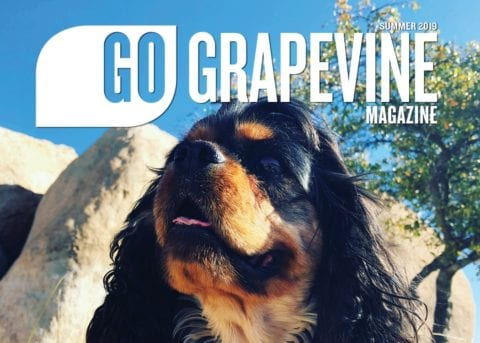 go grapevine magazine summer 2019 dog in park on cover