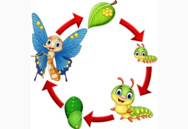 butterfly life cycle vector 22962229